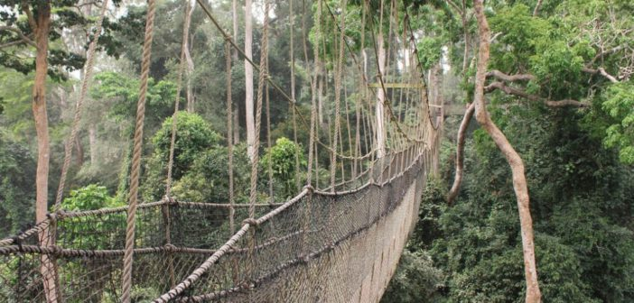 Kakum National Park and the Canopy Walk Cape Coast